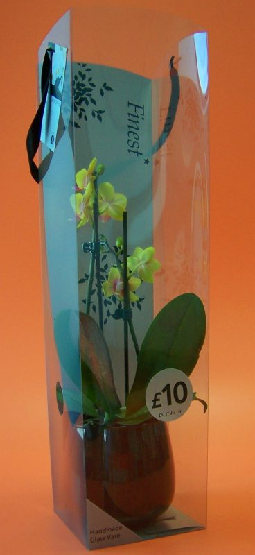 double orchid in acetate box with handles