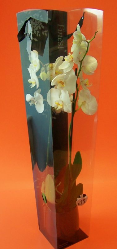 pastel yellow double orchid in printed acetate box