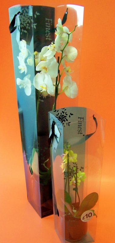 small and big acetate box for orchids