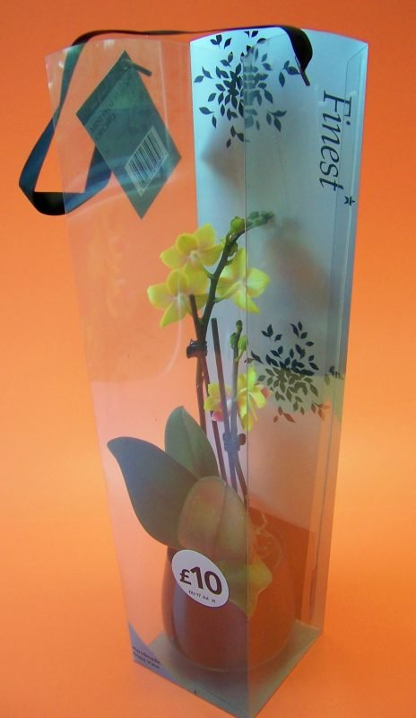 small yellow orchid in printed acetate gift box