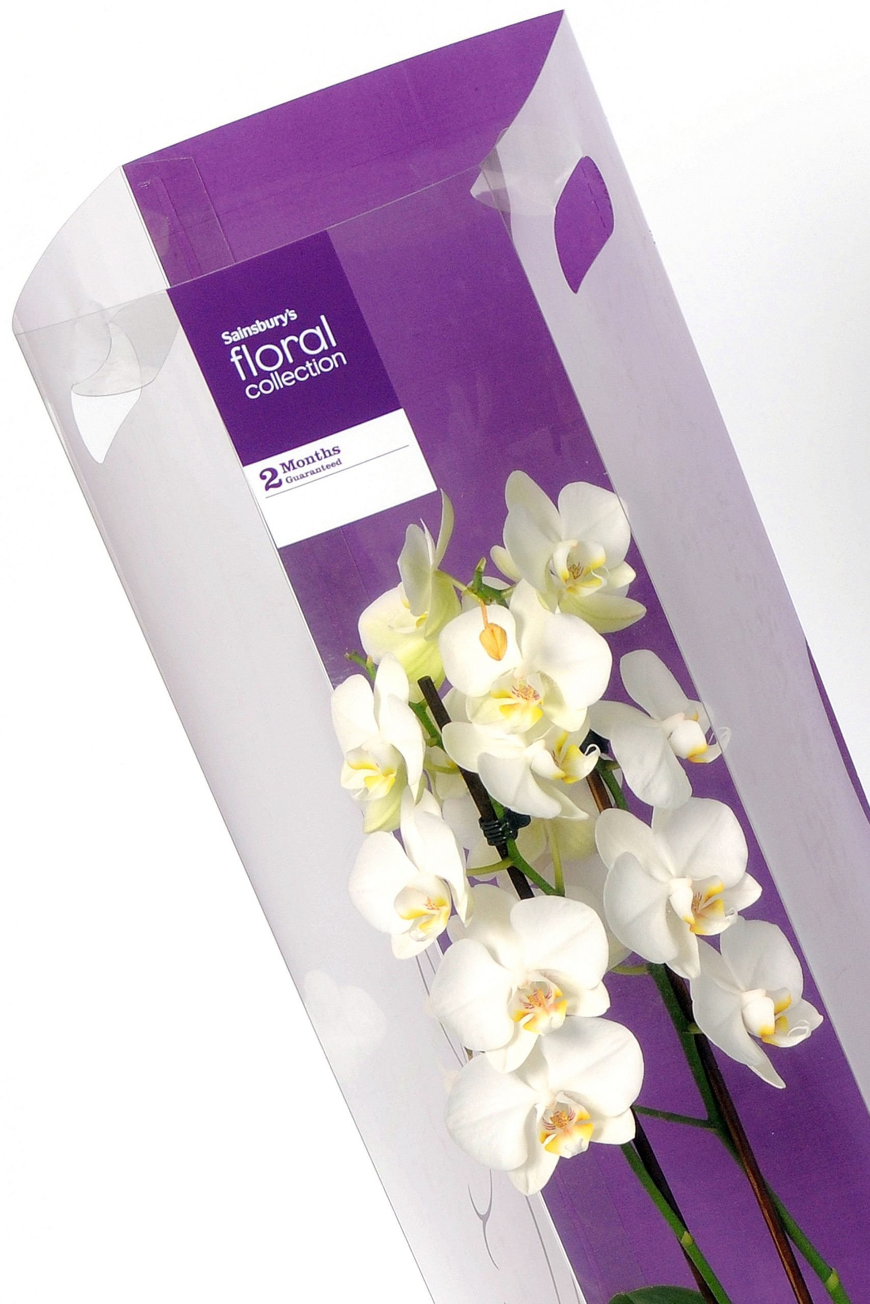 plastic packaging for white orchids