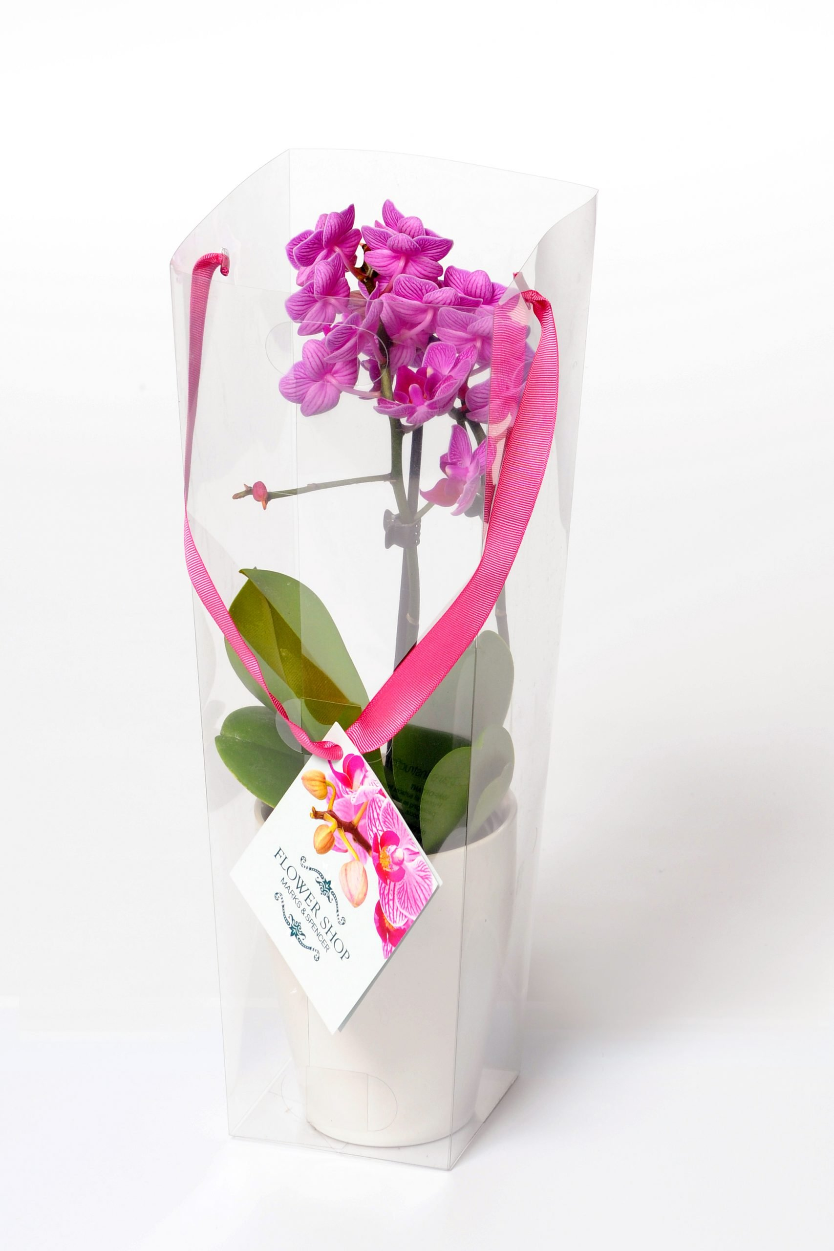 plastic packaging box for flowers